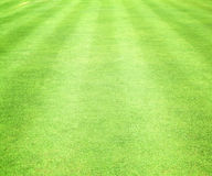 Green lawns Royalty Free Stock Images