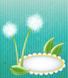 Green layout with dandelions Stock Images