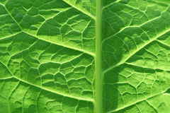 Green leaf. Close up, background Stock Photography