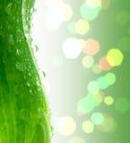 Green leaf. Green leaf beautiful, chlorophyll, dew, drop Stock Images