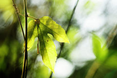 Green leaf. A green leaf hanging on a branch stock photo