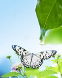 Green leaf. Green leaf beautiful, chlorophyll, dew Royalty Free Stock Photography