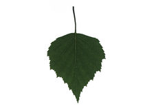 Green leaf. On the white background Stock Photo