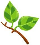 Green leaf stock illustration
