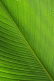 Green leaf. A background pattern of a green leaf Royalty Free Stock Image