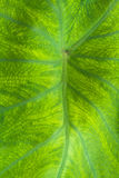 Green leaf. Nice detail leaf on leaf - macro detail Stock Photo