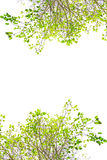 Green leaf. Blank with green leaf on white background Royalty Free Stock Photo