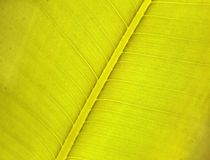 Green leaf. Closeup of green leaf with organic details Royalty Free Stock Photo