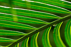 Green leaf Royalty Free Stock Photos