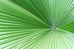 Green leaf. Big green leaf in the gardens stock photography