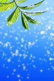 Green leaf. On abstract snowflake background Royalty Free Stock Image