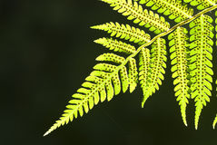 Green leaf. Close up shot of green leaf royalty free stock images