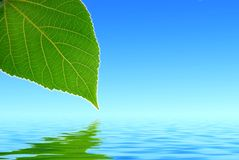 Green leaf. Reflected in water Royalty Free Stock Photos