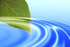 Green leaf. Reflected in water Royalty Free Stock Image