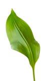 Green leaf Stock Images