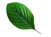 Green leaf. Isolated on white stock photography