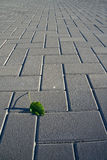 Green leaf. On a suburban pavement with strong lines and perspective Stock Photo