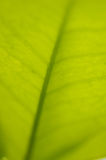 Green leaf. Closeup of a green leaf Stock Images