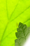 Green leaf. Amazing close up of green leaf Stock Photo