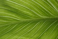 Green leaf. Abstract view of green leaf stock image