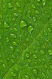 Green leaf. Stock Photo