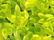 Green leaf. Detailed fresh, green leaf_natural Stock Photography