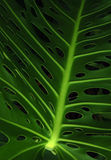 Green leaf Stock Photography