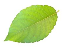 Green leaf Stock Photo