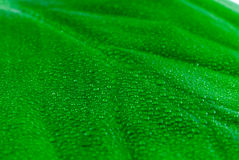 Green leaf. Stock Photography