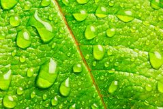 Green leaf. Horizontal image of leaf and raindrops Stock Photos