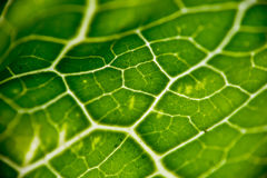 Green leaf. A close up of a green leaf pattern Stock Photography