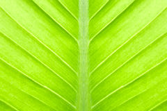 Green leaf abstract Stock Photography