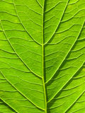 Green leaf abstract background in vertical composition Stock Photo