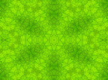 Green leaf abstract pattern Royalty Free Stock Photos