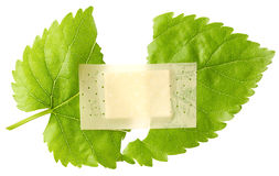 Green leaf with adhesive plaster Royalty Free Stock Photo