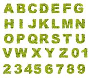 Green leaf alphabet Stock Images