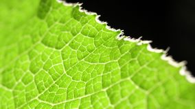 Green leaf analysis. Macro shot of green leafs and plants been analyzed stock video footage