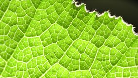 Green leaf analysis. Macro shot of green leafs and plants been analyzed stock video