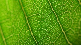 Green leaf analysis. Small plants and trees with macro details stock footage