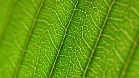 Green leaf analysis. Small plants and trees with macro details stock video footage