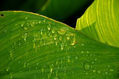 Green Leaf And Water Droplet Stock Photo