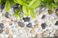 Green leaf and arranged stone. Particle Stock Photography
