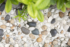 Green leaf and arranged stone. Particle Stock Images
