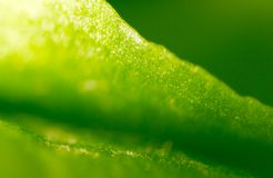 Green leaf as background. macro. In the park in nature Stock Image