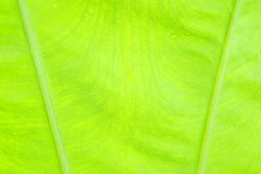 Green leaf as background Stock Photography