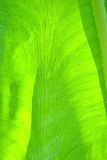 Green leaf as background Royalty Free Stock Photography