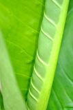 Green leaf as background Stock Photo