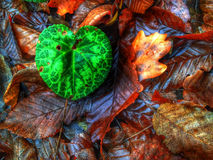 Green leaf in autumn background Royalty Free Stock Image