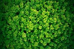 Green leaf backdrop Royalty Free Stock Photos