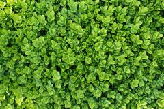 Green leaf backdrop Royalty Free Stock Image